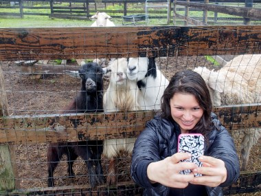 Goats love selfies