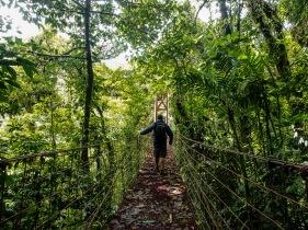 A rickety wobbly bridge through the canopy