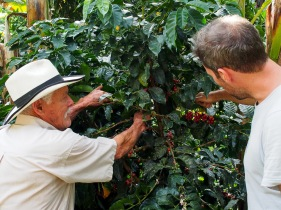 Don Elias showing us how to cut away the coffee berrys.