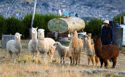 PERU-150610-11825