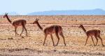 Cruise Control on the Bolivian Salt Flats